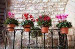 مشام مسافران نوروزی با گلهای محلات معطر می شود