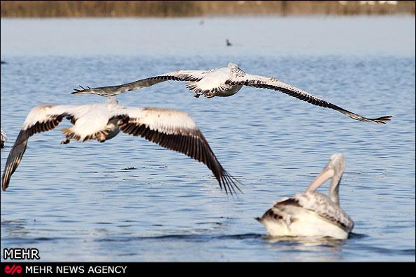 IMG15041320 سهم نداشتن بهشت پرندگان از گردشگری و اشتغال