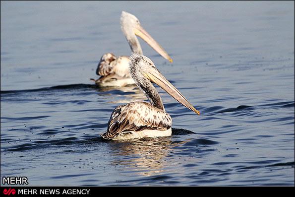 IMG15041384 سهم نداشتن بهشت پرندگان از گردشگری و اشتغال