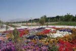 زیباشهر
