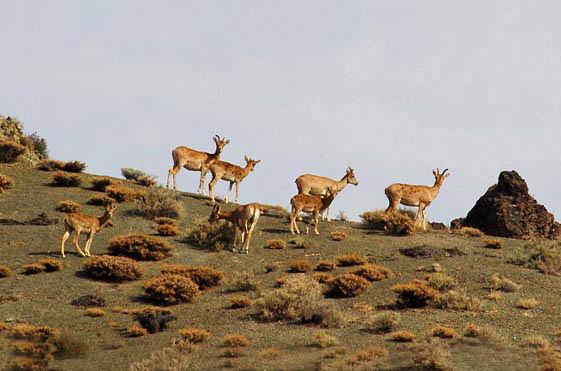 منطقه شکار ممنوع درکش و هاور