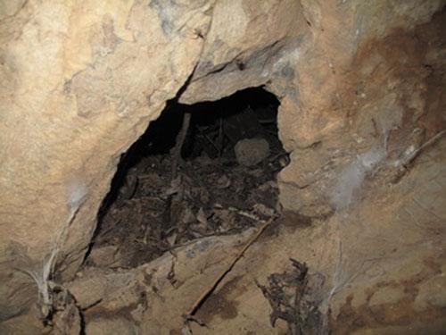 غار-هملون6