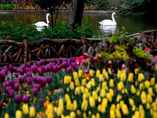 پارک-چمران--باغ-گل-ها2