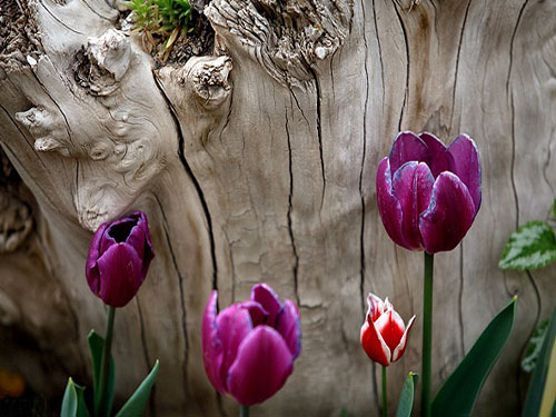 پارک-چمران--باغ-گل-ها3