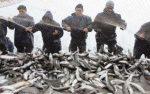 سوغات دریایی شمال در معرض خطر/کفال نخورید