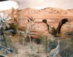 موزه حیات وحش