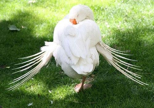 باغ-پرندگان-تهران10(1) باغ پرندگان تهران، بزرگترین باغ پرندگان در کشور