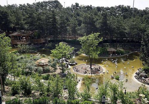 باغ-پرندگان-تهران12 باغ پرندگان تهران، بزرگترین باغ پرندگان در کشور