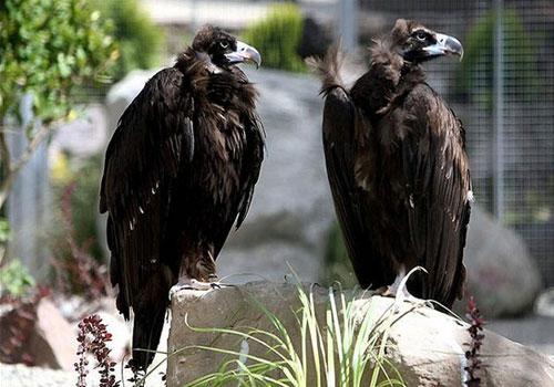 باغ-پرندگان-تهران13 باغ پرندگان تهران، بزرگترین باغ پرندگان در کشور