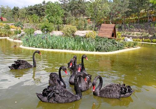 باغ-پرندگان-تهران15 باغ پرندگان تهران، بزرگترین باغ پرندگان در کشور