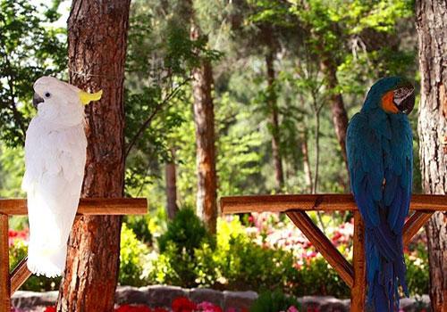 باغ-پرندگان-تهران16 باغ پرندگان تهران، بزرگترین باغ پرندگان در کشور