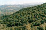ارزیابی شرایط اقلیم گردشگری استان های شمالی حاشیه دریای خزر