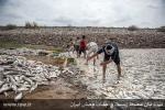 فاجعه زیست محیطی مرگ میلیونها ماهی بر اثر آلودگی آب سد فشافویه