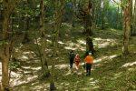 پارک جنگلی هلودشت