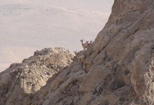 پارک-ملی-قطرویه3 پارک ملی قَطرویه