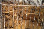 آزار دردناک حیوانات در سیرک قشم