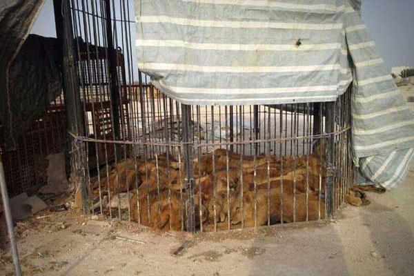 122666_405 آزار دردناک حیوانات در سیرک قشم