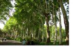 درختان کاخ سعدآباد نجات بخشی و احیا شدند