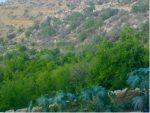 چشمه باغ باغات