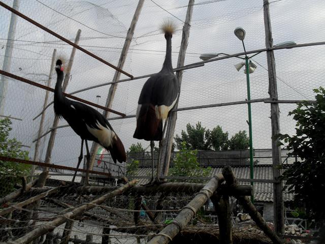 باغ وحش ساری