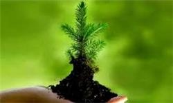 13920905000350_PhotoA جشنواره محیط زیست در آموزههای رضوی برگزار میشود