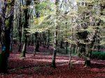 جنگل شالتماس