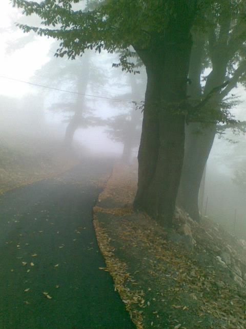 منطقه جنگلی اوریم