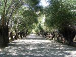 شهر باغستان