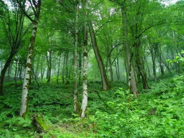 خیبوس 4 منطقه حفاظت شده خیبوس
