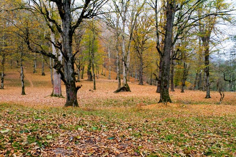 صفارود 1 بوستان جنگلی صفارود