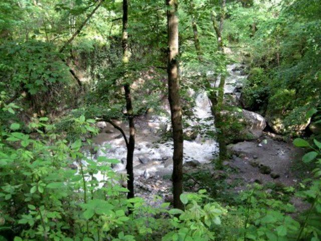 صفارود 3 بوستان جنگلی صفارود