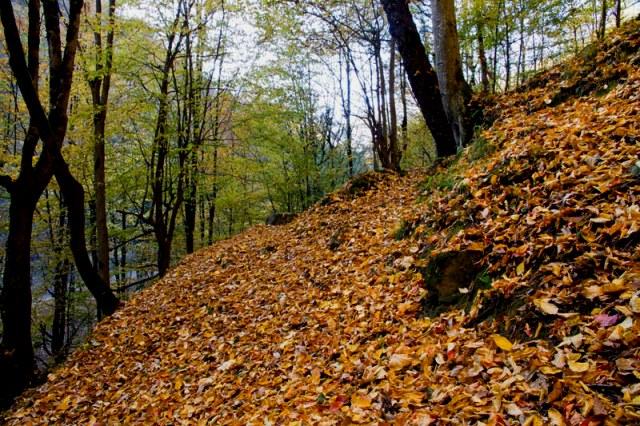 صفارود 4 بوستان جنگلی صفارود