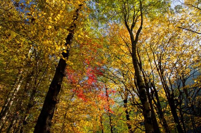 صفارود بوستان جنگلی صفارود
