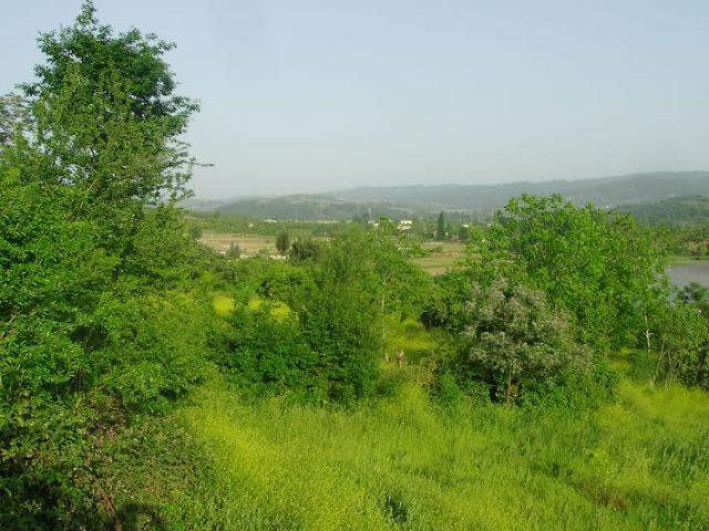 DIGITAL CAMERA جنگل کوتنا
