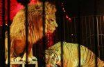 اجرای سیرک سیروس قهرمانی با مجوز سازمان محیط زیست