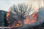 به دلیل بی توجهی مسافران پنج هکتار از اراضی پارک ملی گلستان در آتش سوخت