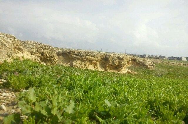 IMG_2295 شهر بردستان