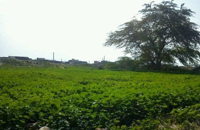IMG_2297 شهر بردستان