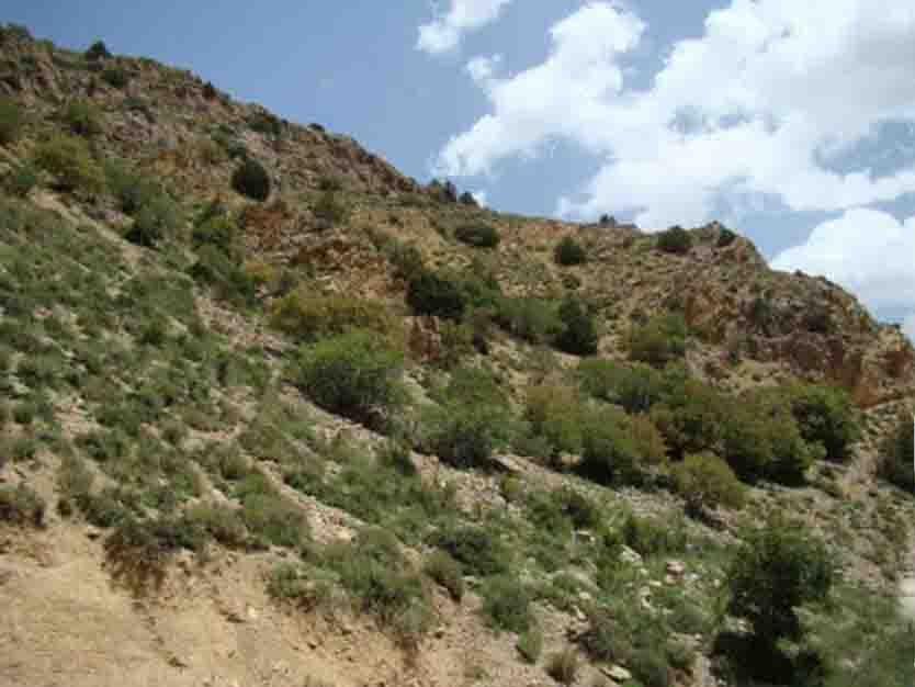 باجگیران(1) منطقه شکار ممنوع مرزی باجگیران