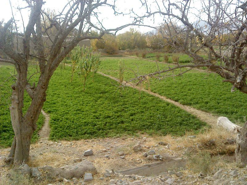 شهر گزیک