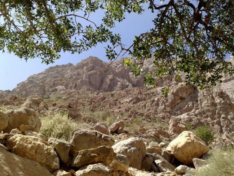 بیرک 3 منطقه حفاظت شده کوه بیرک
