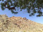 منطقه حفاظت شده کوه بیرک