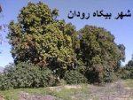 شهر بیکاه