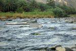 رودخانه سرباز