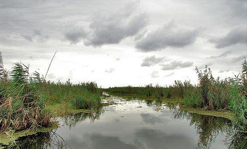رودخانه شاخزر