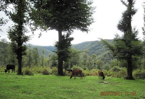 منطقه حفاظت شده سیاه رود