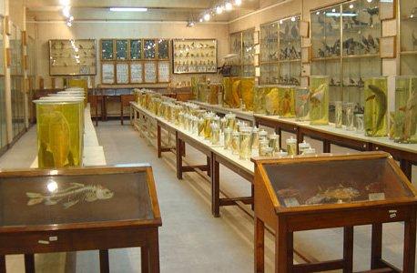 موزه دانشکده علوم ( فاطمی )