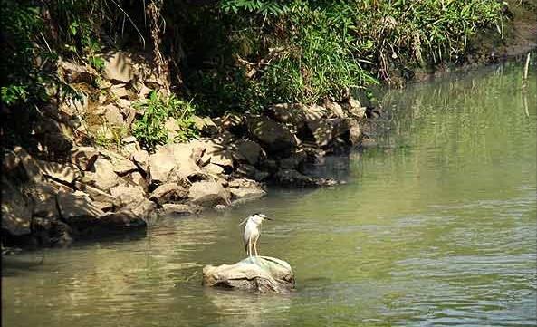 رودخانه گوهر رود