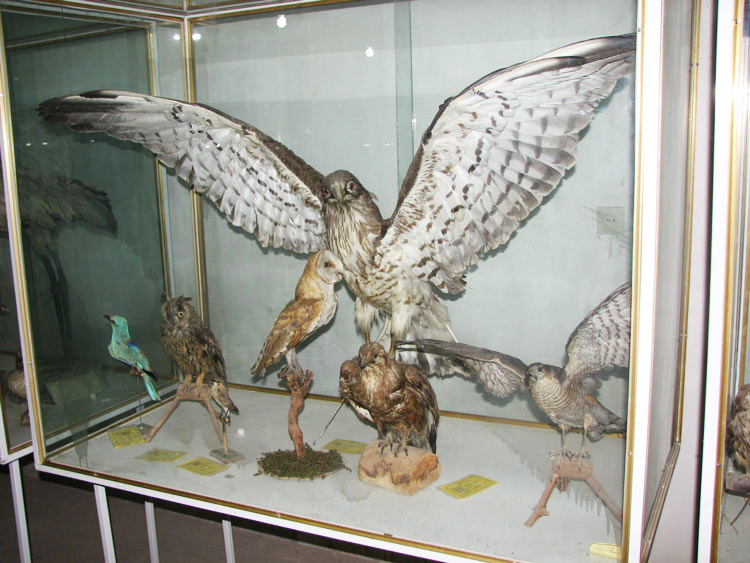 موزه مردم شناسی اردکان