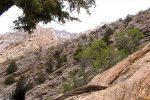 پار ک ملی سیاهکوه